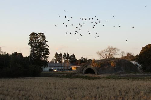 夕暮れの中、鳥が飛び交う掩体壕
