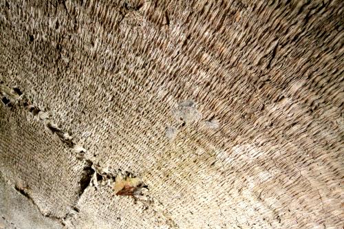 きめ細やかに残るムシロの痕。見れば見る程おもしろい掩体壕