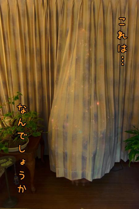 カーテンの影に、ツリーが。