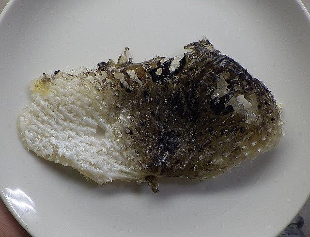 初公開、ハリゼロホンの皮。目立つ大きな穴は表側から無理やり抜いた際に開いたものと胸ビレの跡。