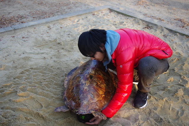 やっぱり亀には砂が似合う。
