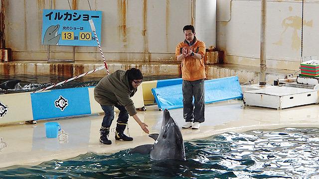 イルカのショー!