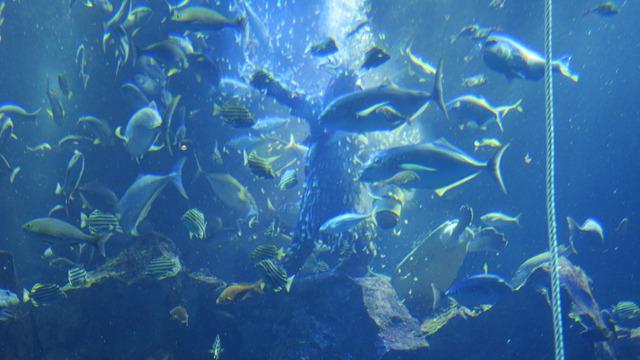 魚影の中になまはげがいる
