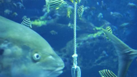 そのとき一本のロープがおりてきてみんなさわぎはじめた。こころなしか魚たちもロープに集まる(エサがもらえるからか)