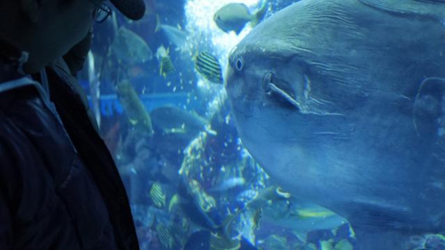 マンボウ、奥になまはげ。すごい水族館。