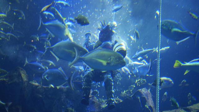 魚影のむこうのなまはげの神々しさ。なまはげが神様であることを実感できるのはここだ!