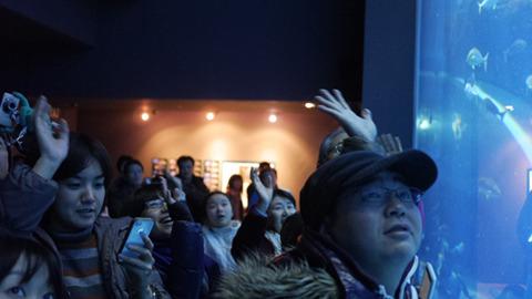 最後はみんなで手をふってお別れをする。これが秋田の水族館の年末年始である