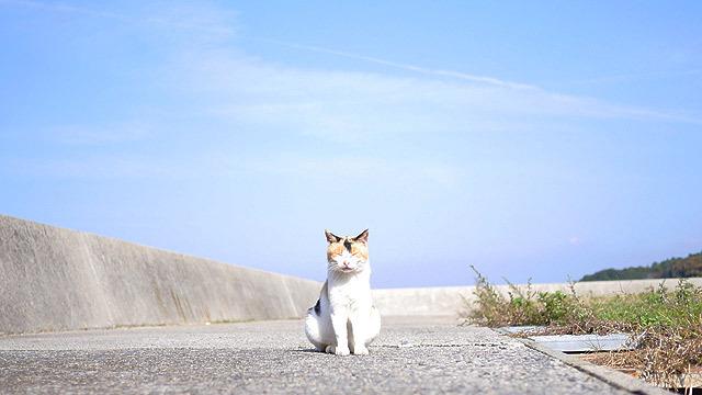 猫だらけの島に行きます!