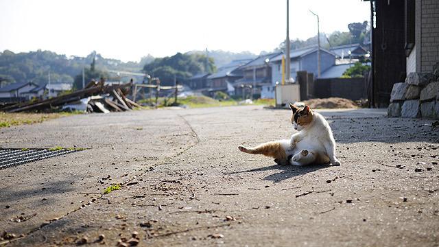 猫を見てこの気持ちを落ち着ける