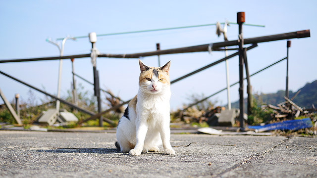 おいしそうな脚の女子校生 238脚目猫ガイジ隔離スレ [無断転載禁止]©bbspink.com->画像>3749枚