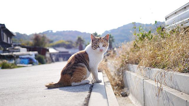 これは本当の子猫ちゃん!
