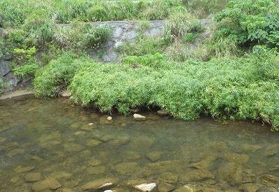 水がきれいで岩の多い川が狙い目