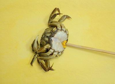 「ふんどし」を外して胴体と甲羅の隙間に箸を差し込み、てこの原理で甲羅をはがす。