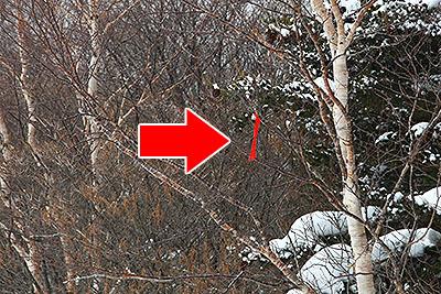 木に付いてる赤テープは、『ここがルートですよ』っていう目印です。