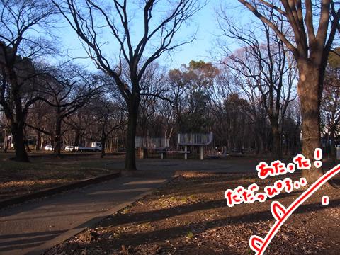 都立城北中央公園というすごく広い公園に