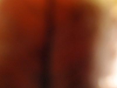 落ち葉の中で写真を撮ってみましたが、何だこれ。