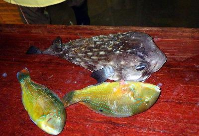 ネズミフグやシロクラベラ(マクブ)など、一尾数千円はする高級魚が目立った。しかもそれが飛ぶように売れていく。
