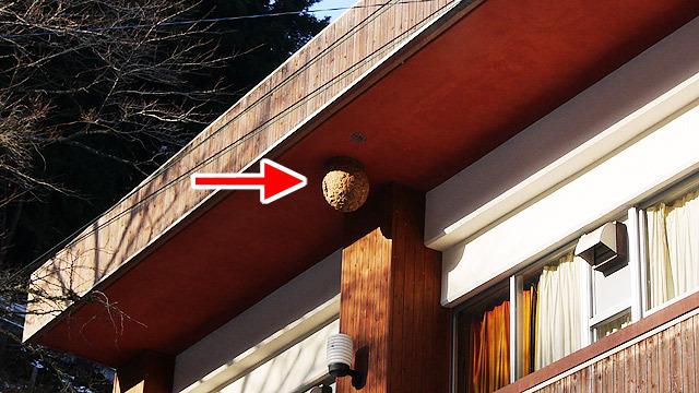 分校にスズメバチの巣が普通にあったジメ。女子大生と一緒に授業と思うとちょっとウキウキ