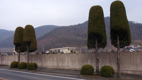 善光寺の近くにアフロヘアみたいな木が並んでいた