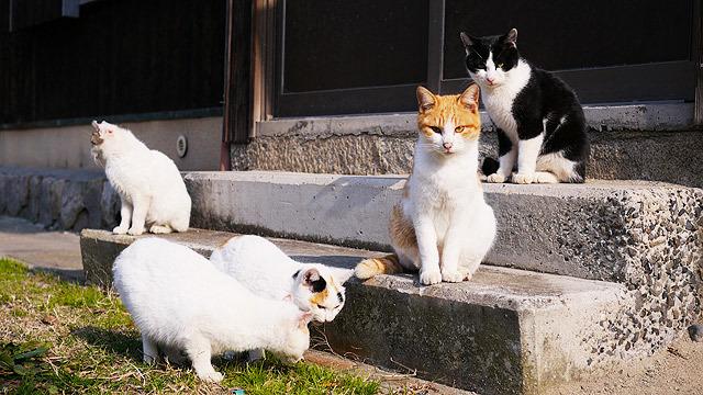 猫が積極的な島に行きます!