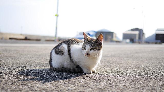 この猫を撮っていたのに、