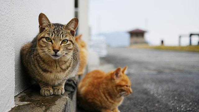 お墓ゾーンを抜けると猫