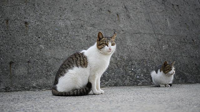 猫の写真を撮っているが、
