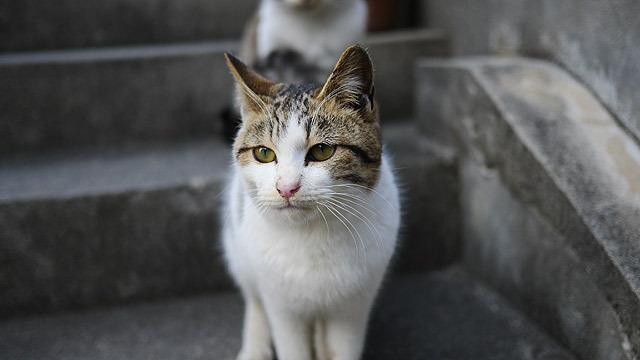 国内に何ヶ所かあるという猫の多い島、猫島。その中でも特に積極的な猫たちがそろった島に行ってきました。香川県の佐柳島です。立ち止まるとカメラのピントが合わないくらいの勢いで猫が近づいてきます。(安藤)