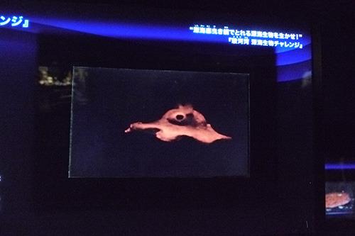 パコパコ泳ぐ姿は別途モニターで記録映像が再生されていました。
