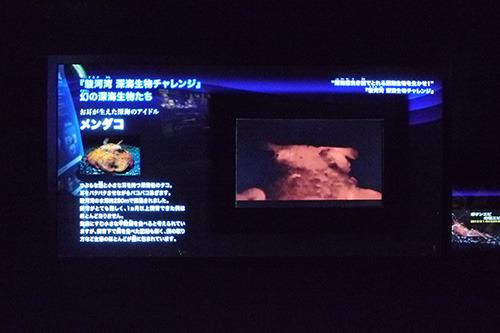深海ゾーンの中では一等地に展示されています。