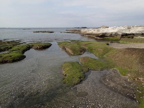 そして冬。青藻が岩を覆っている。