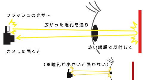 赤目写真の仕組み。瞳孔が大きくなると目の赤い部分を写せるそうだ