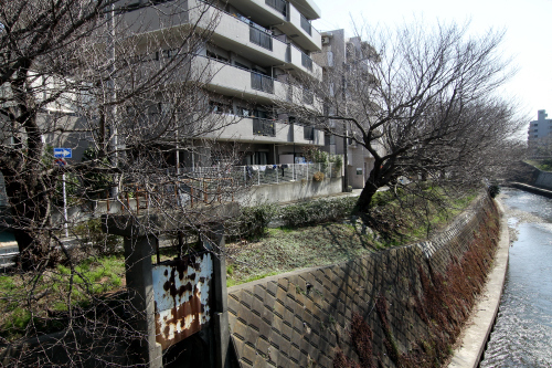 川沿いには桜が植えられている