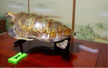 海亀の中身は、アイポンという製品。