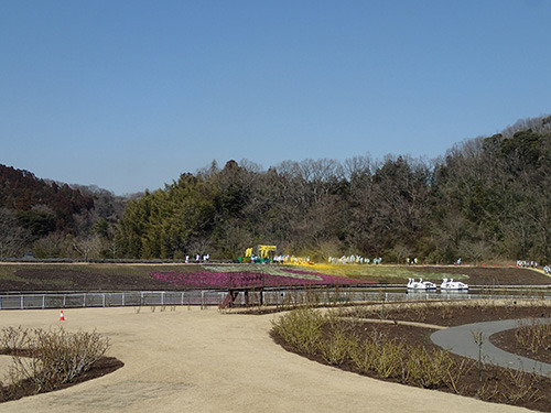 遠くに見える黄色いところがたぶん粉スポット。花粉症のイメージ写真みたいだ。
