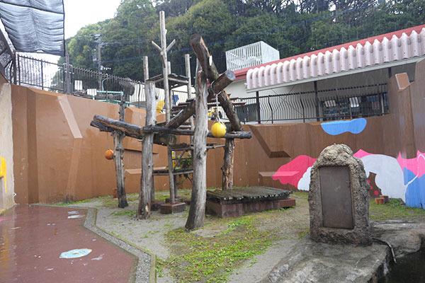 そして、こちらがマレーグマの運動場。いわゆる「檻の中」ですよ!