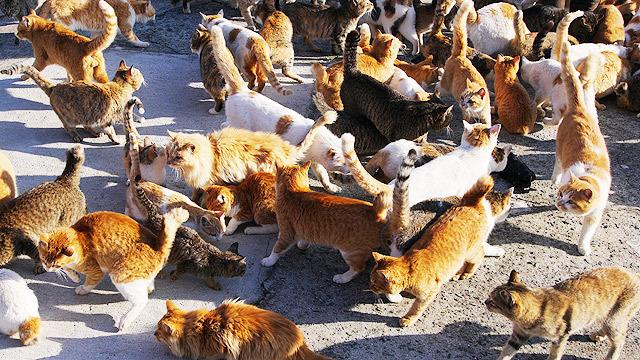 全部ネコです!
