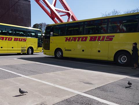 東京タワーの外に出ると、はとバスの近くにハトがいた。