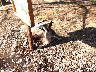 こども動物自然公園でもひまつぶし。寄り寄りでワラビー見れます。