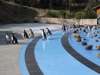 脱走したペンギンとかも見られるよ。