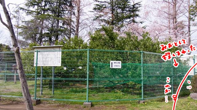 像の前にある「手植みかん」。家康が和歌山からもらったものを植えたそうだ