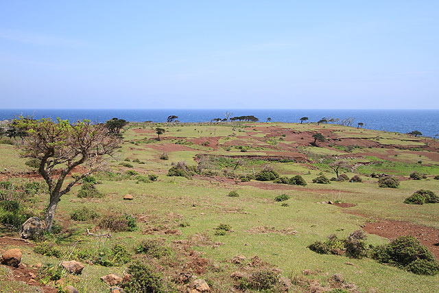島には、サバンナのようなエリアも。(野崎島)