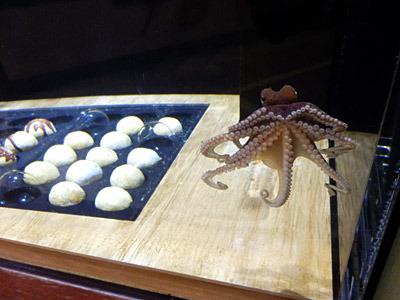 タコ焼きと一緒に展示されていたタコ。全体的にこういうノリの水族館です。
