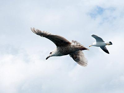 海鳥たちのランデブー。