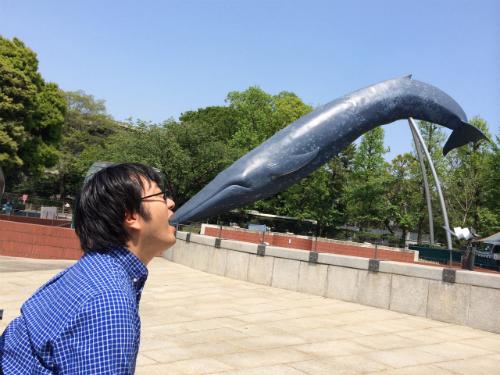 口に飛び込むシロナガスクジラ