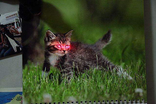 カレンダーの猫も、一気に魔物ですよ?