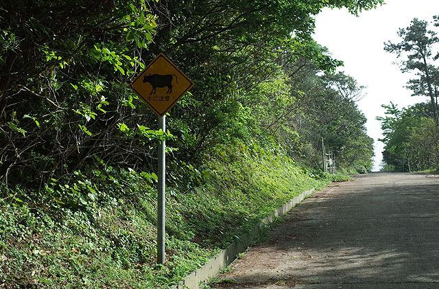 「牛に注意」の標識がそこかしこにある。