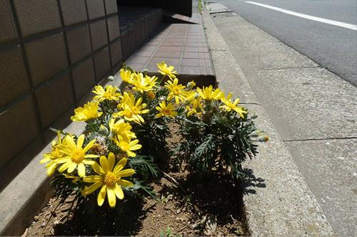 花よ、きみは美しい