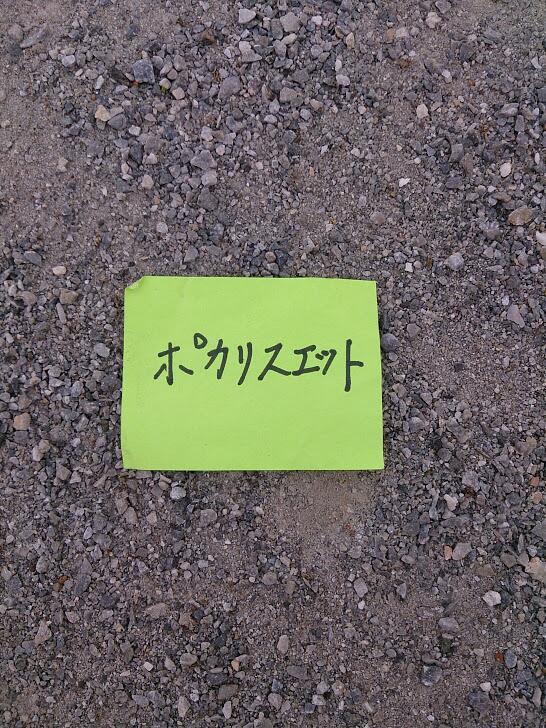 公園に落ちてた(斎藤充博 さん)