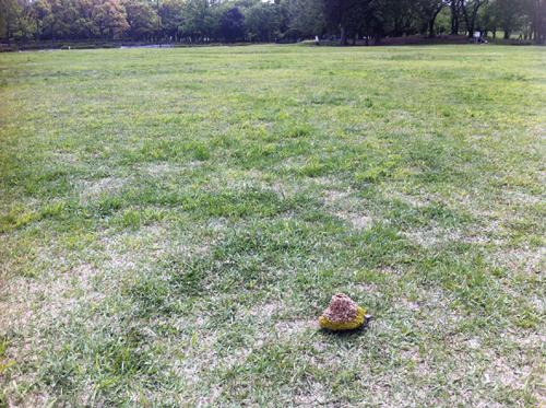大地に溶け込む亀